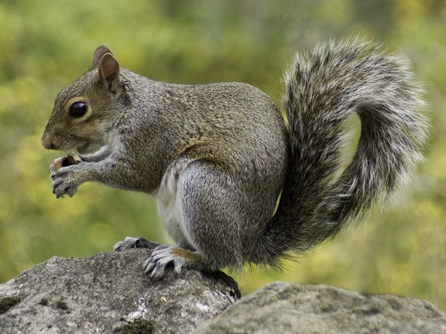 A man was ticketed and expected to appear in Loveland Municipal Court for feeding squirrels in his yard. Read more about this story here.